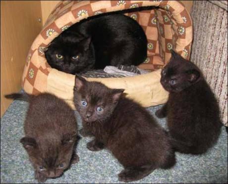 Černá krásná kočička
