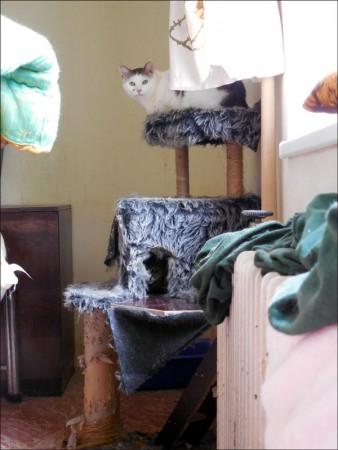 trpaslík černá kočička
