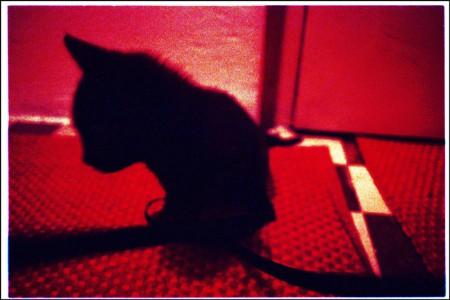 Stříkat kočičí díry