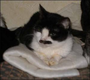 oholené tuk kočička obrázky